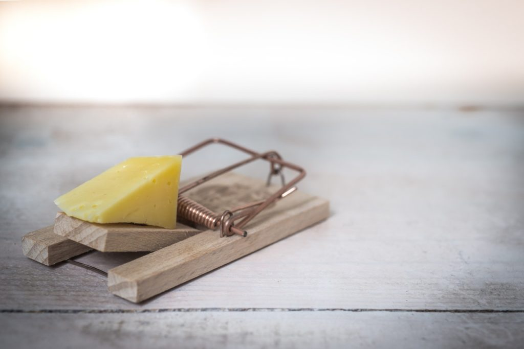 a mousetrap with cheese showing risk vs reward
